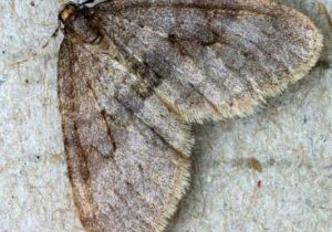 Amazing-Winter-Moths familytruthministries.org